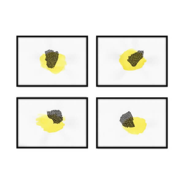 Polyptych - Sophora 2 - drawing